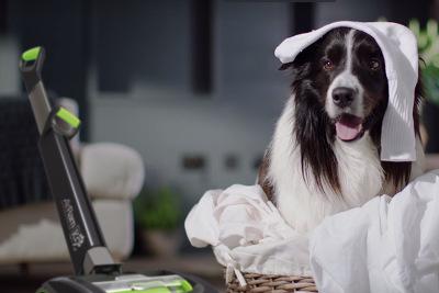 Gtech AirRam K9 Staubsauger für Haushalte mit Haustieren